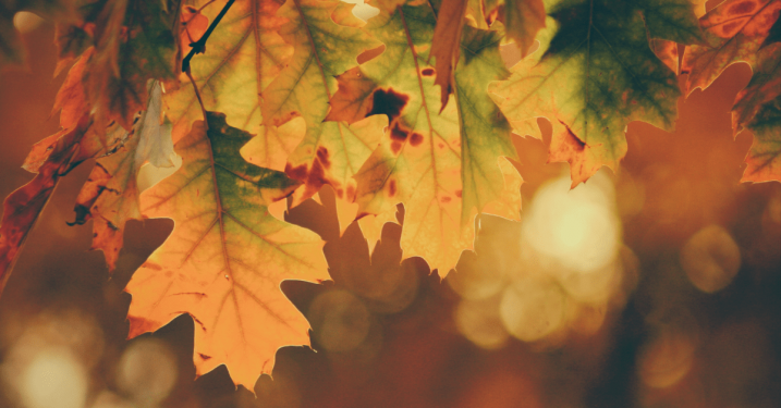 The Ultimate Gardening & Lawn Care Guide – 10 Tasks To Do This Autumn